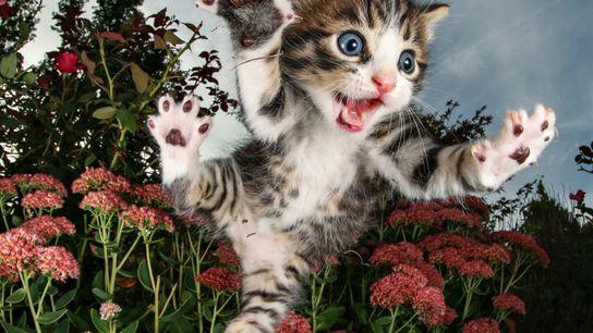 explore-gatos-pulando-sobre-flores