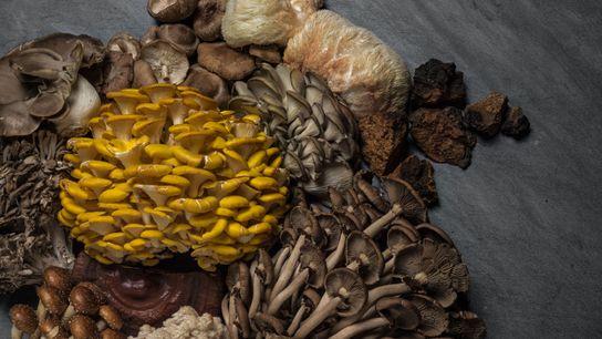 Fungos comestíveis como shiitake, ostra-dourado e juba-de-leão têm sido associados a um aumento da imunidade e ...