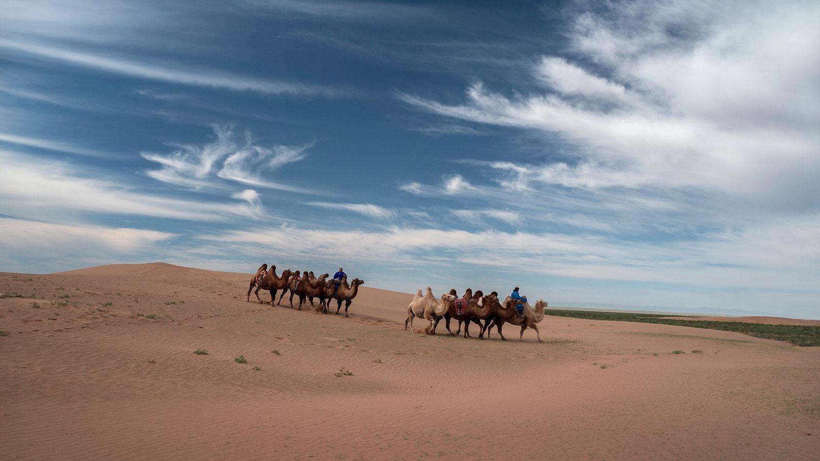 Camelos andam pelas dunas de areia do Deserto de Gobi, que se estende do norte da ...