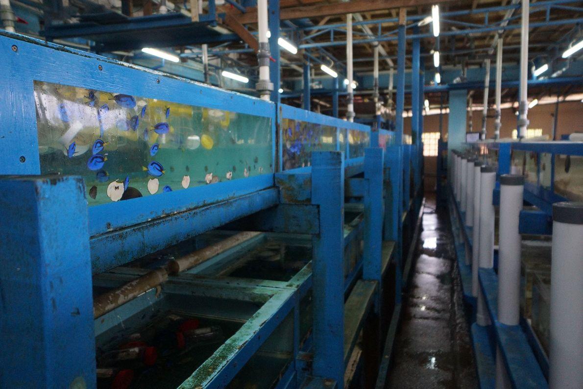 mercado-de-peixes-exoticos-aquario