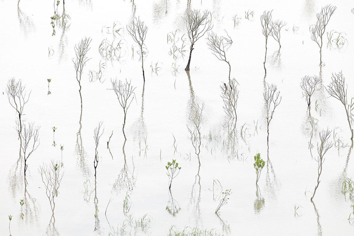 Floresta de mangues