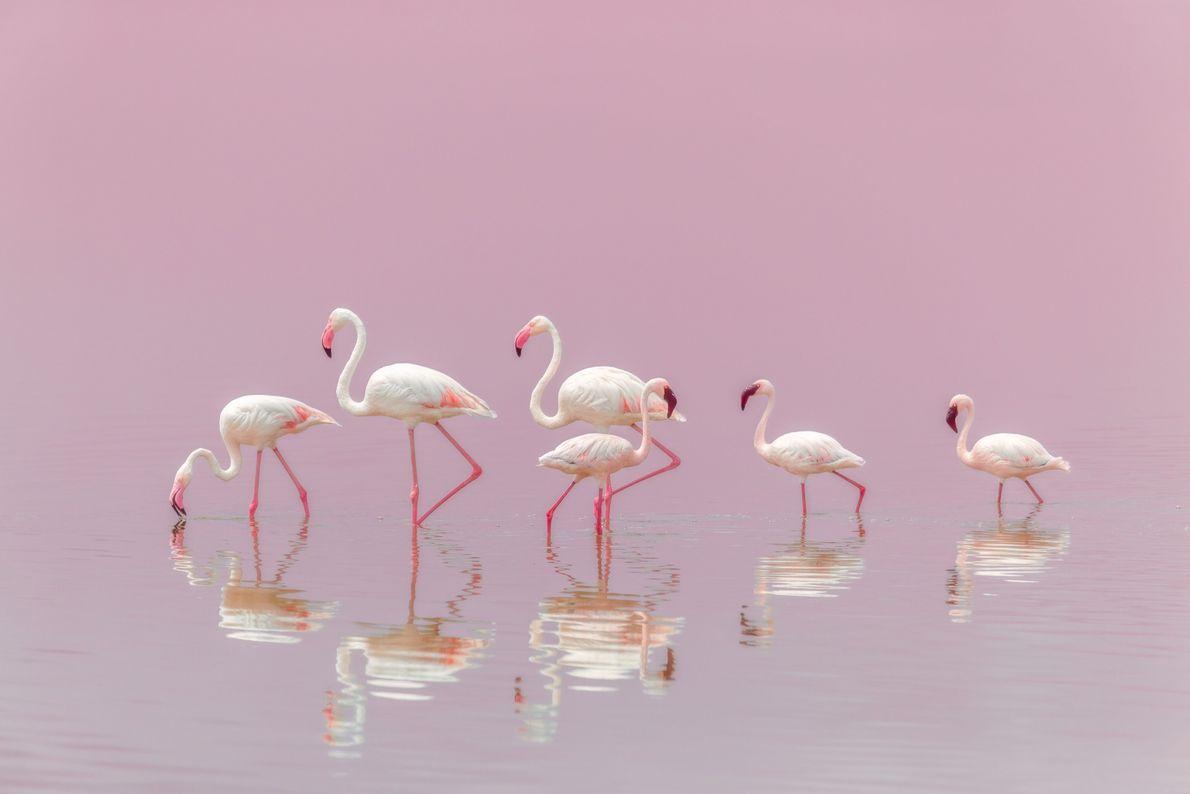 Flamingos em lagoa