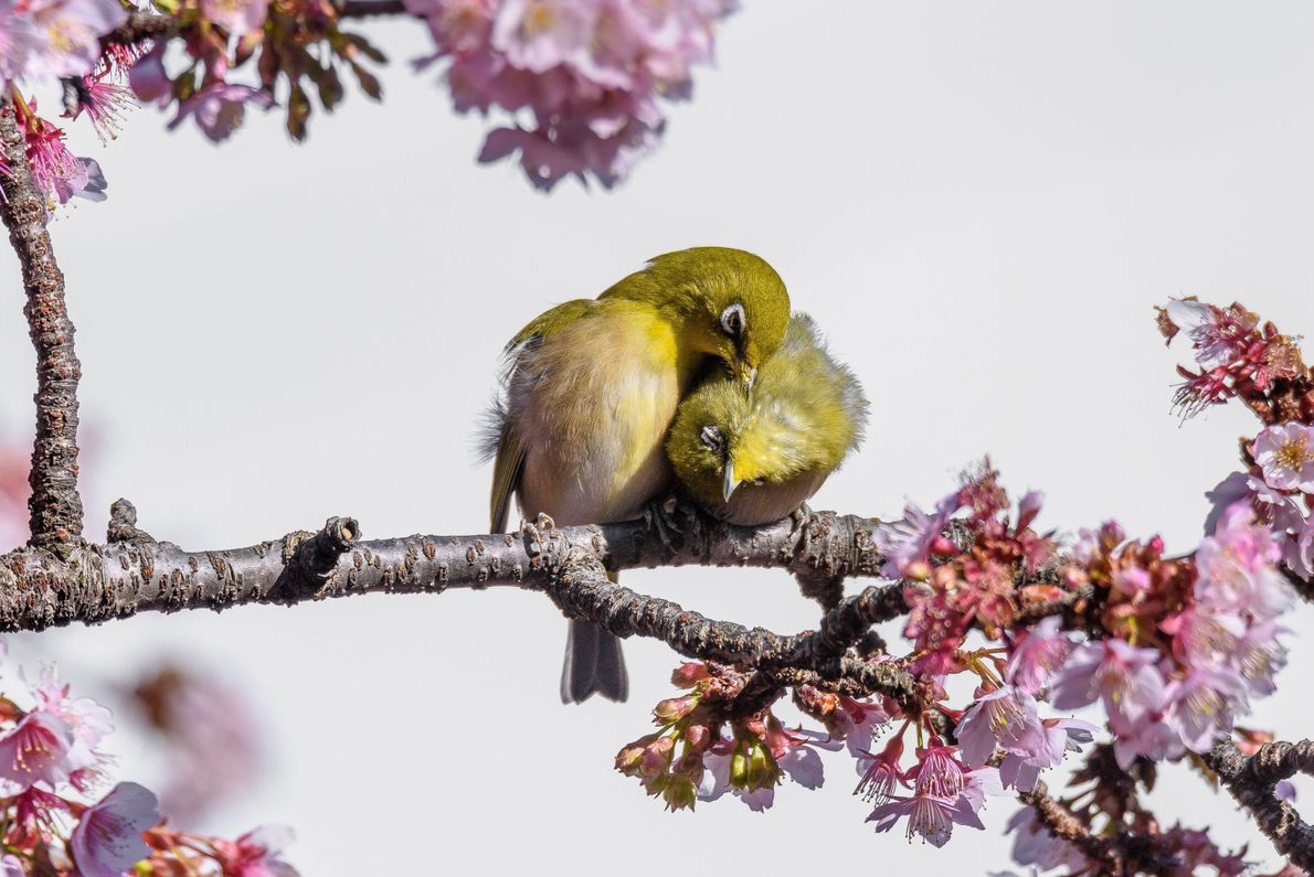Amor de primavera