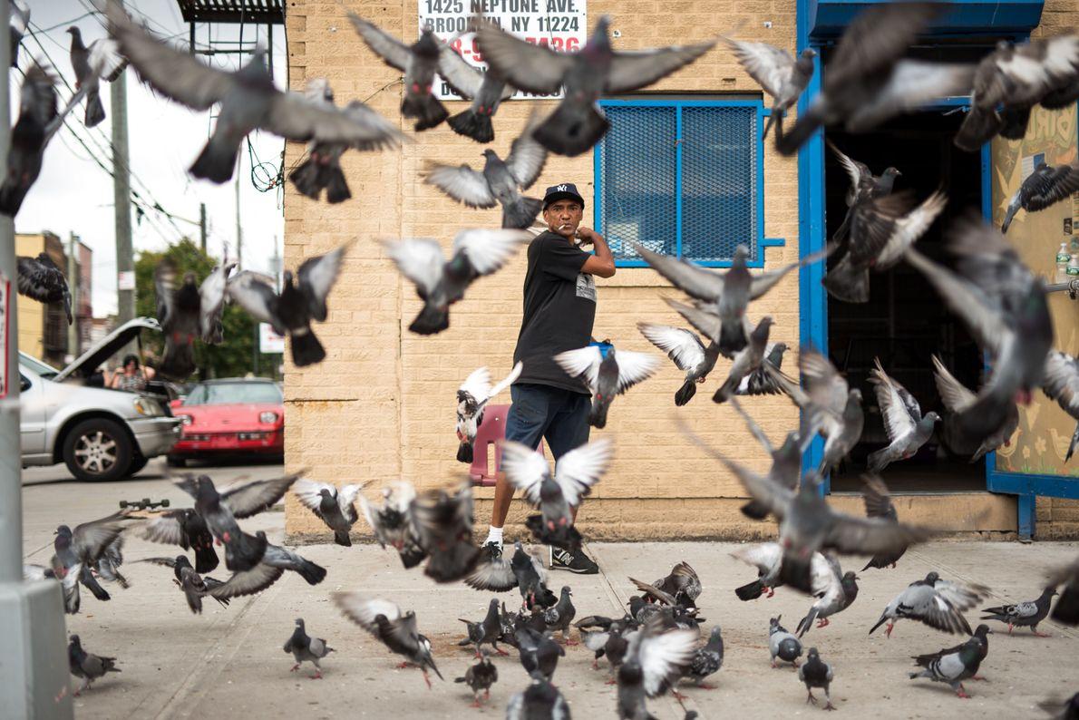 Encantador de pombas
