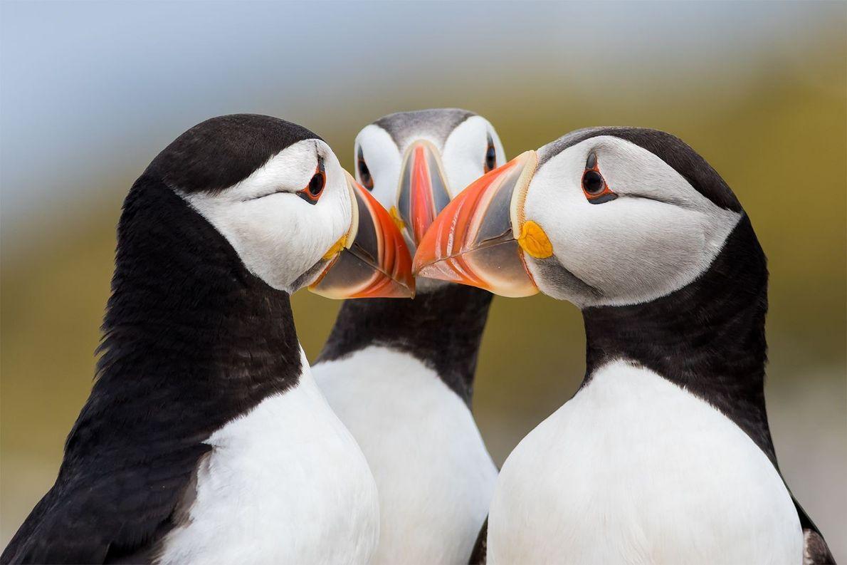 Bico com bico