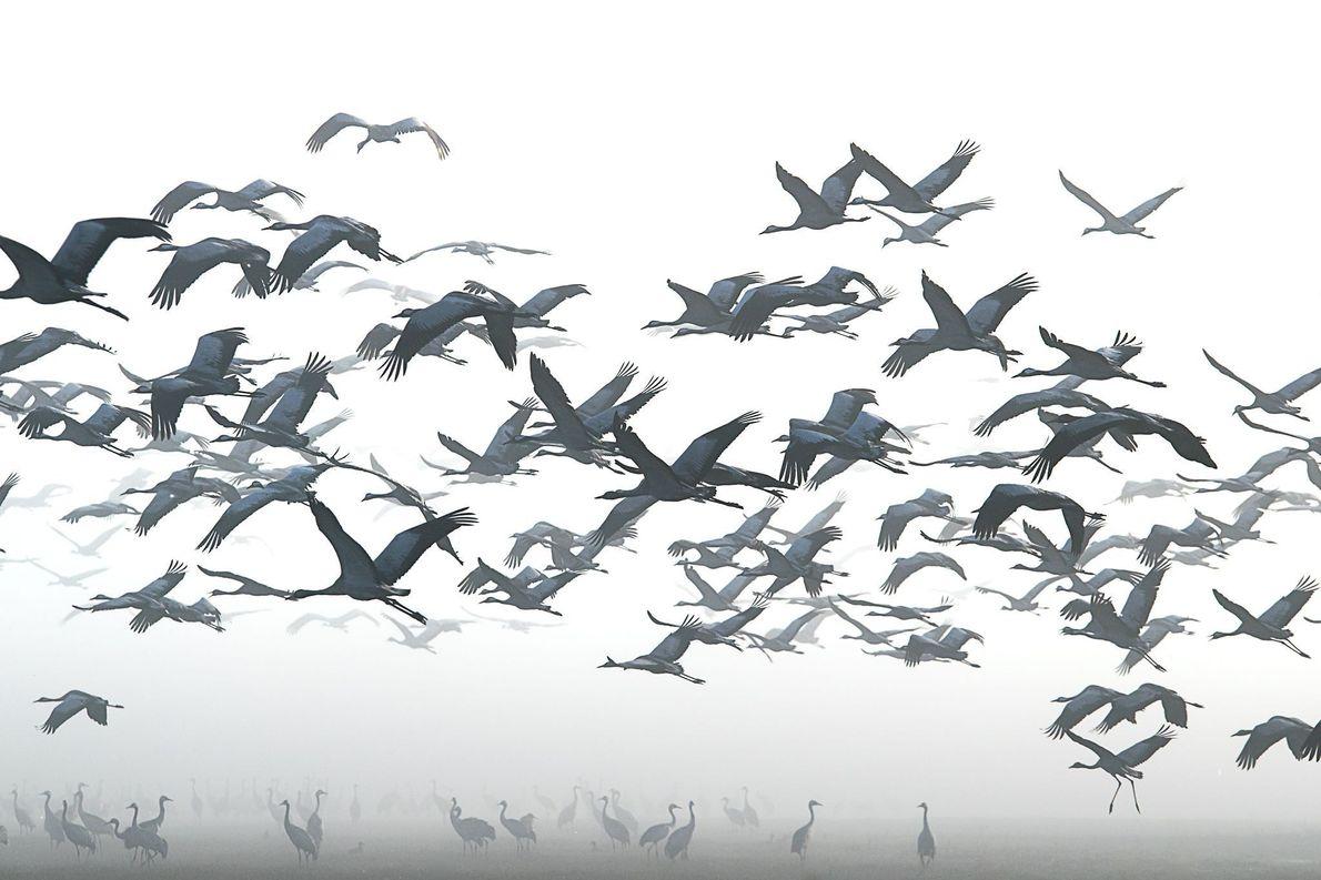 Aves da neve
