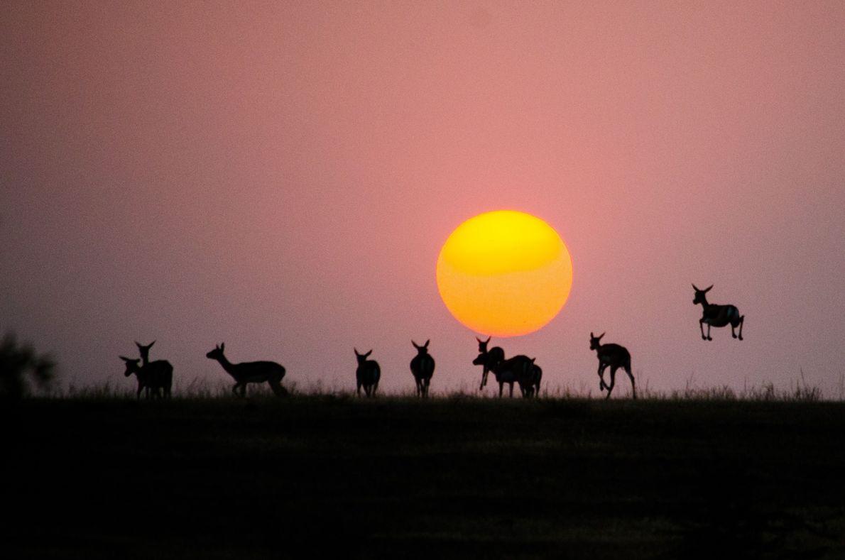 Saltos ao sol