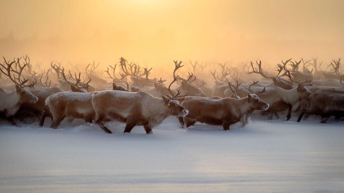 Caminhada de inverno