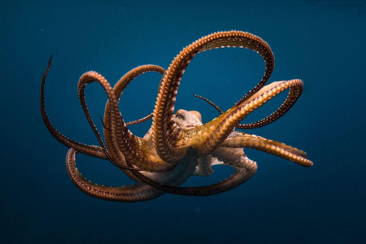Trama subaquática