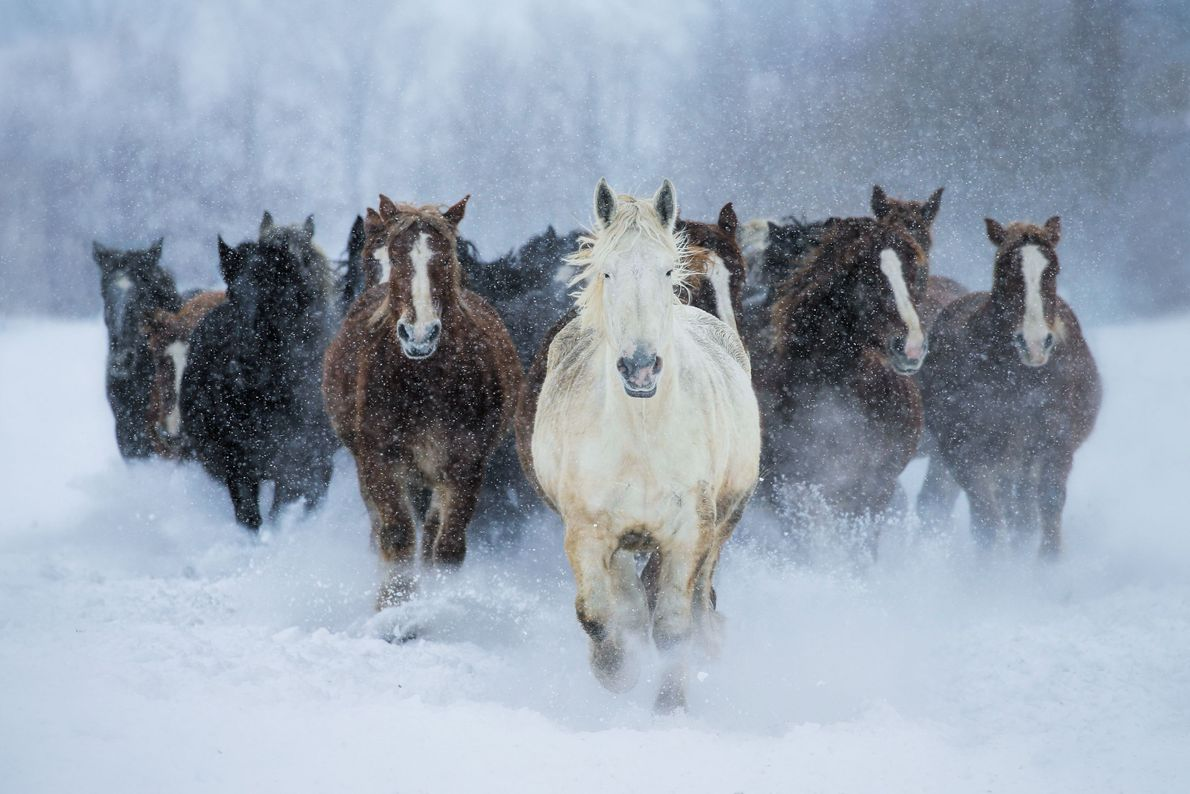 Cavalos correndo na neve
