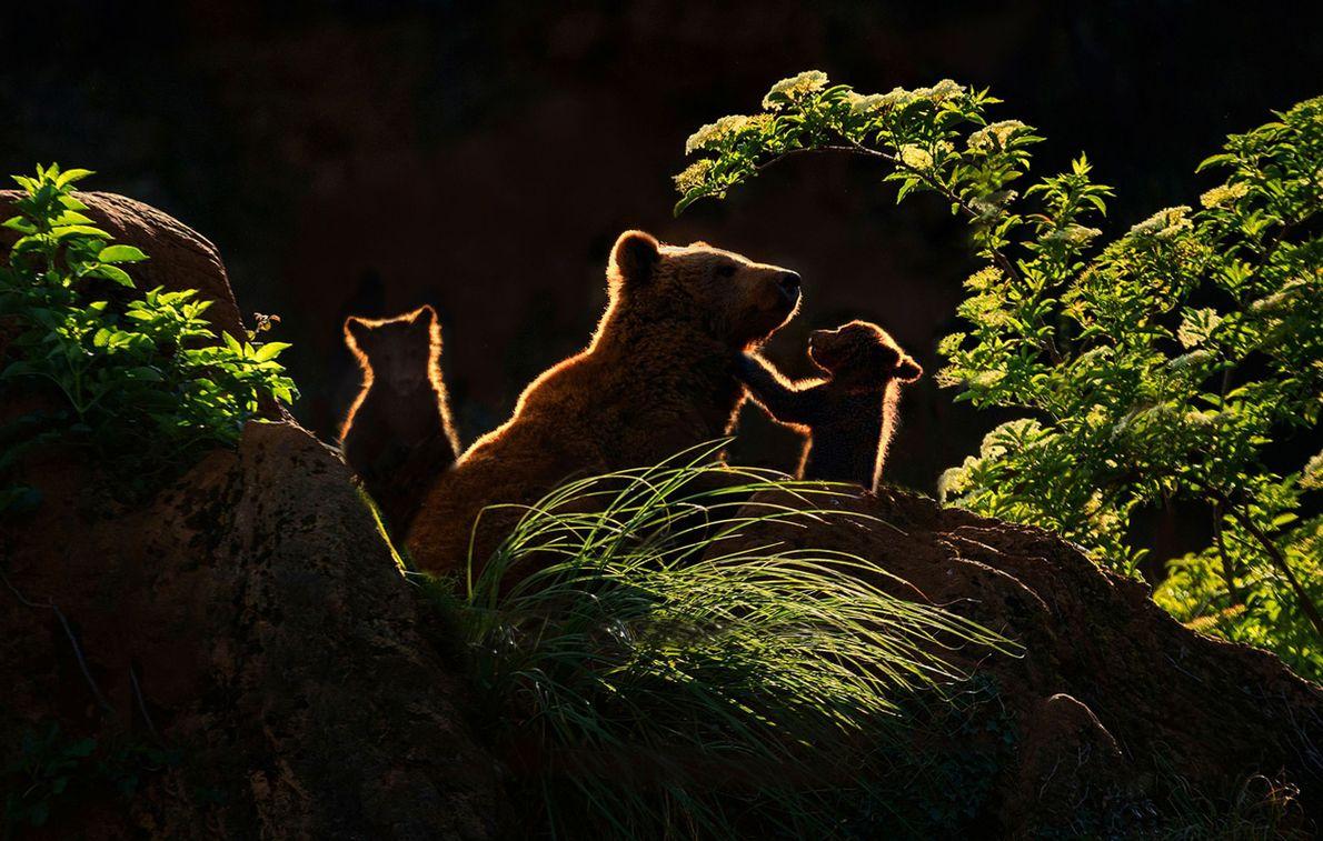 Três ursos na floresta
