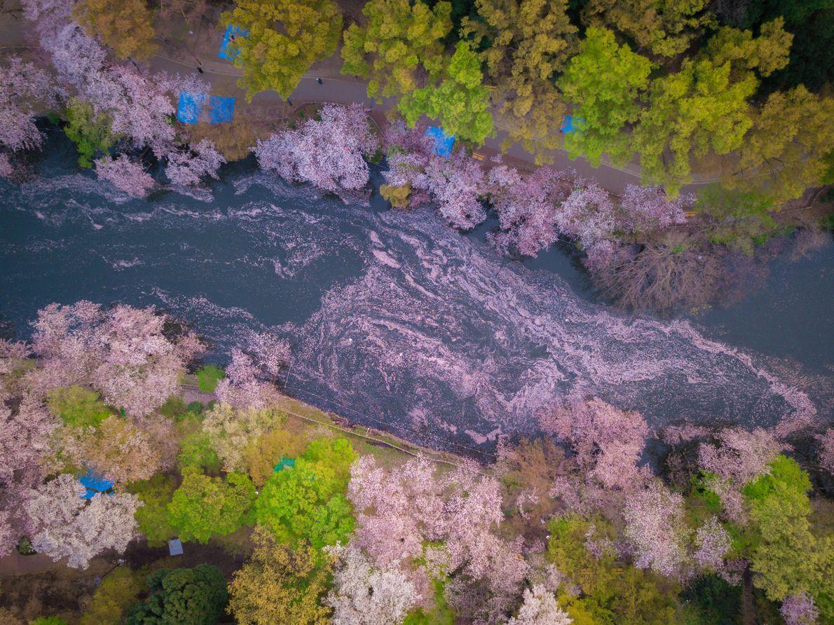 Petal River