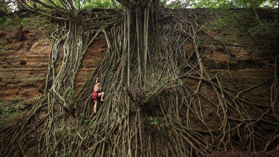 Escalando raízes