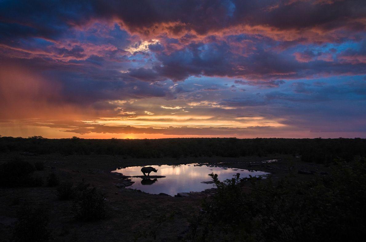 Aprenda a pronunciar Rinoceronte solitário