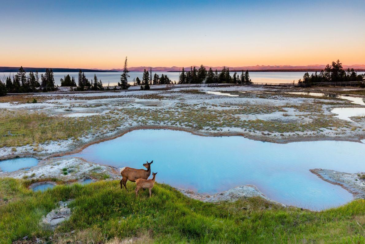 Sol de Yellowstone