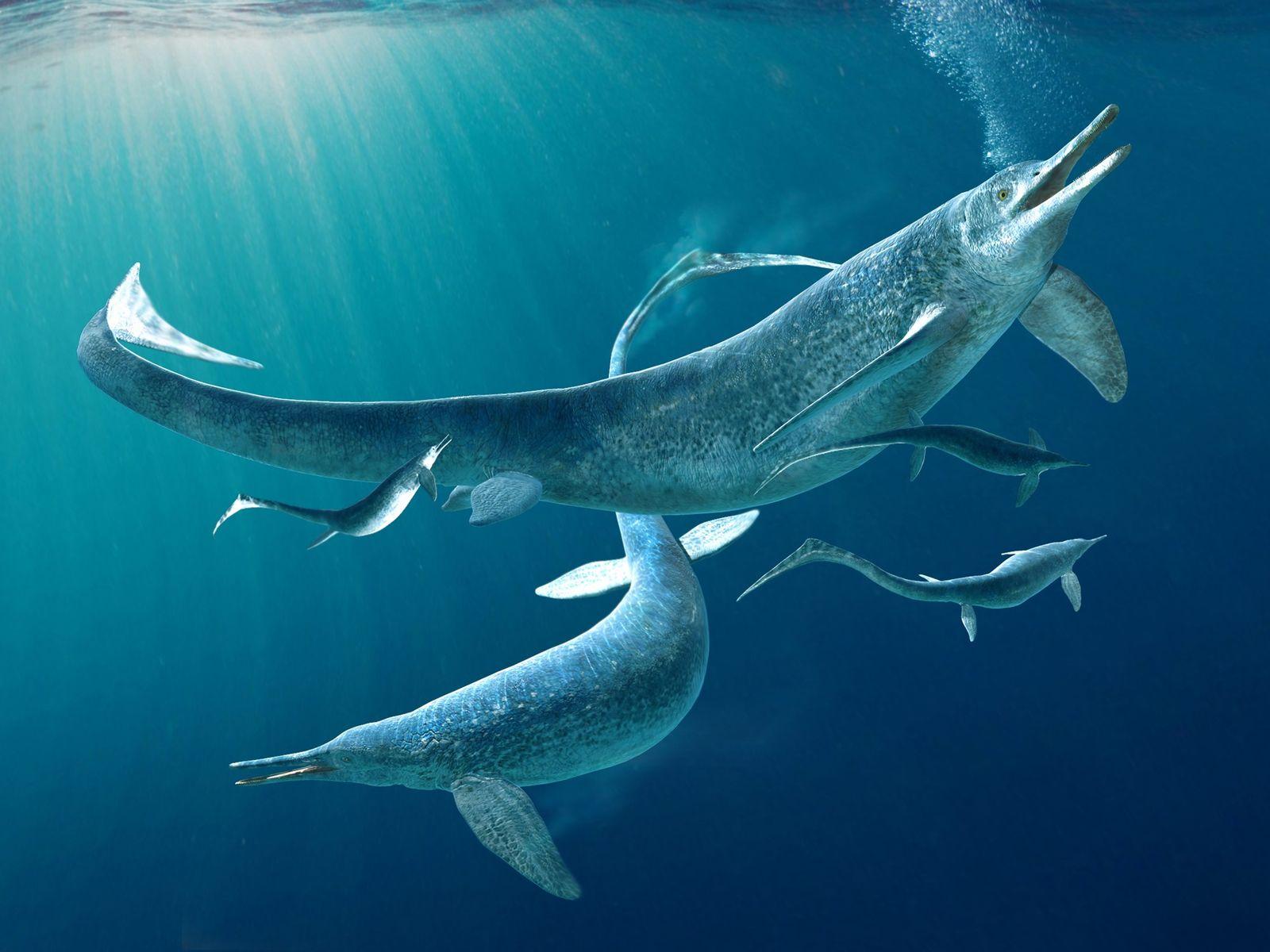 Fóssil recheado: encontrado predador marinho dentro do estômago de outro predador