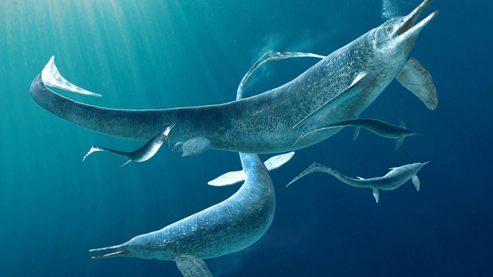 A ilustração mostra um grupo de Besanosaurus, um gênero de ictiossauros, antigos répteis marinhos com certa semelhança ...