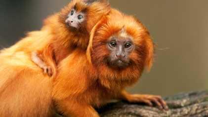 Dia dos pais: as 10 fotos mais encantadoras do reino animal
