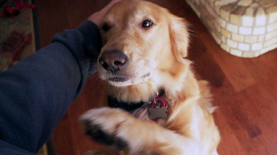 Seu cachorro prefere brincar com outras pessoas?