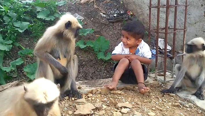 Garoto e macacos selvagens formam amizade incomum