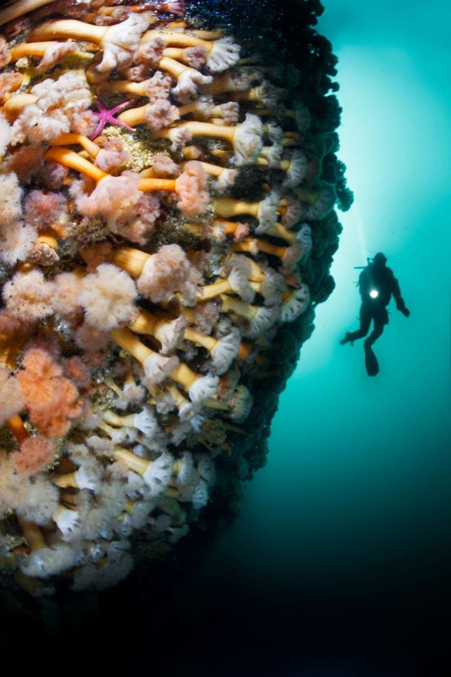 mergulhador recife