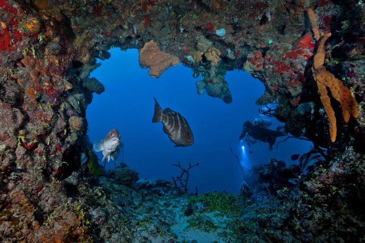 O biólogo marinho David Gruber mergulha em Little Cayman, nas Ilhas Cayman, no Caribe.