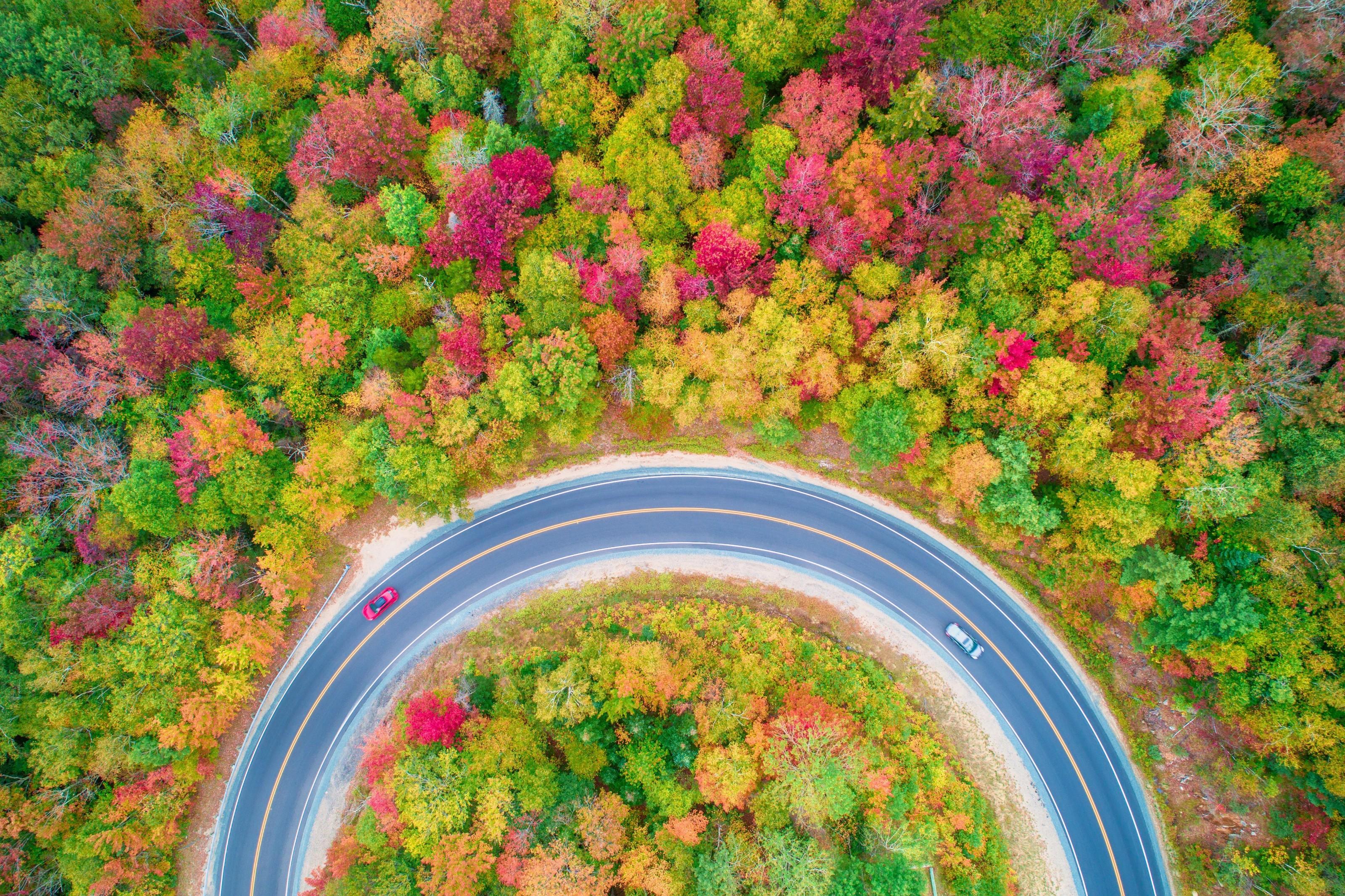 estrada em meio a árvores