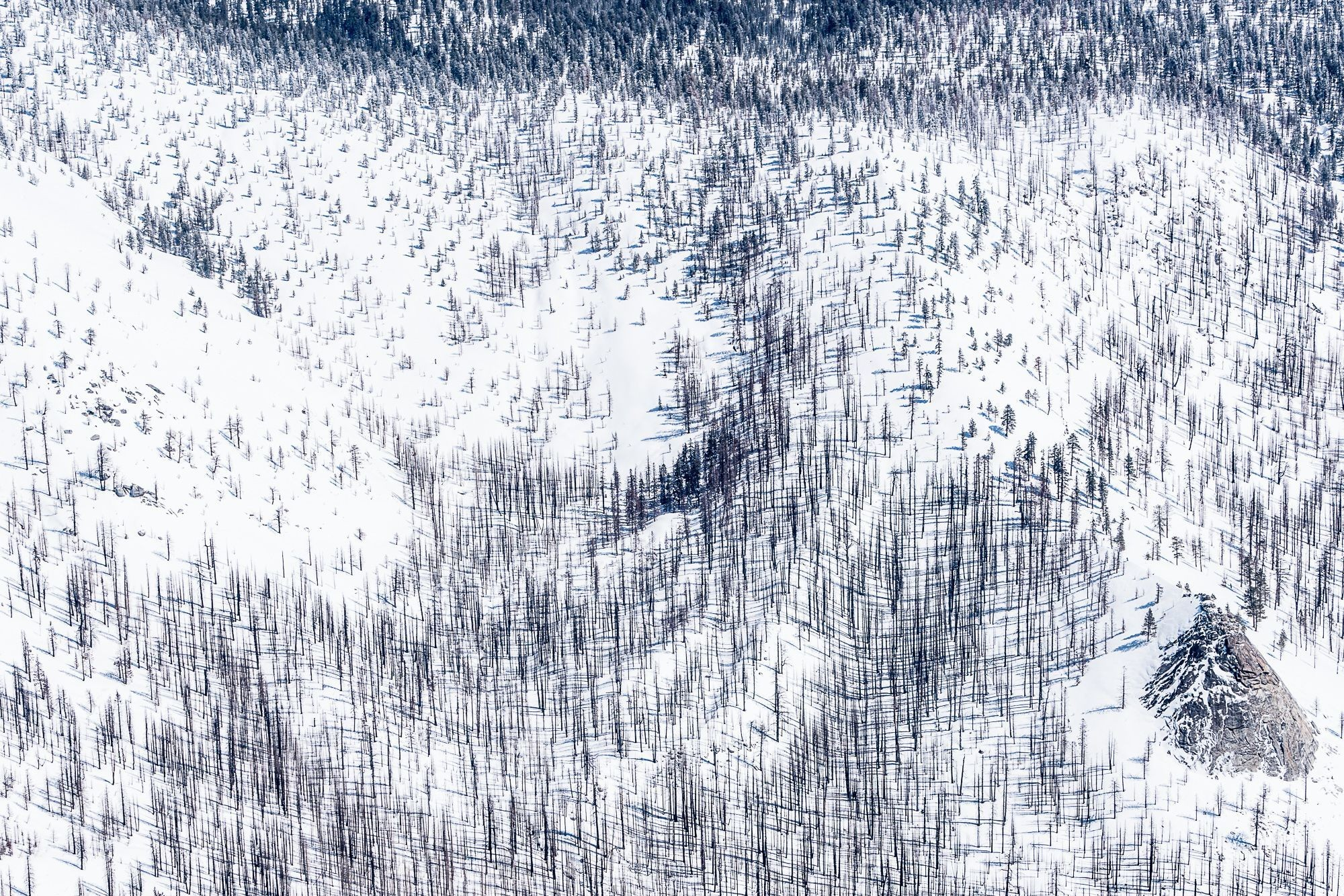 árvores queimadas na neve