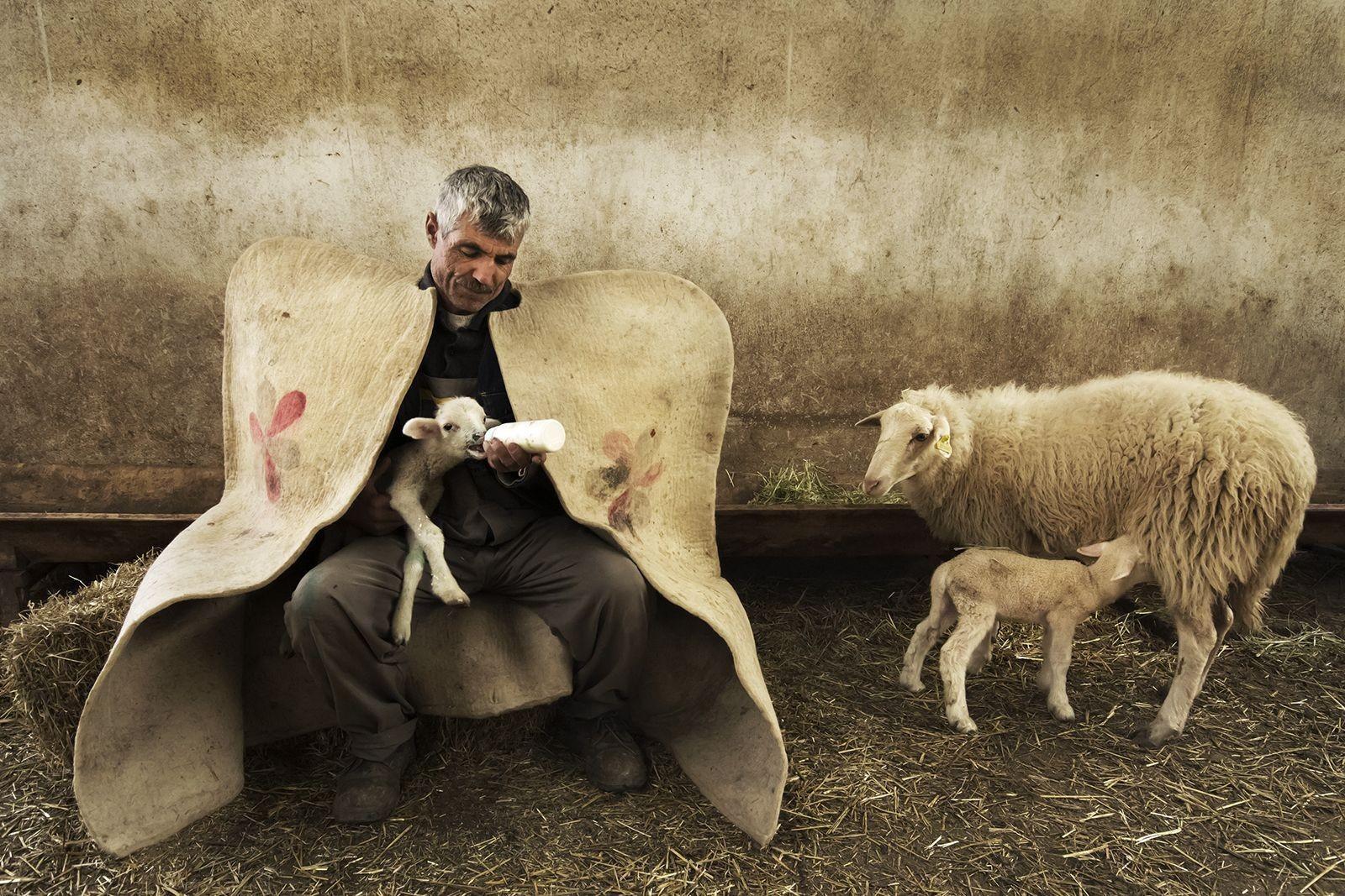 O pastor e o cordeiro