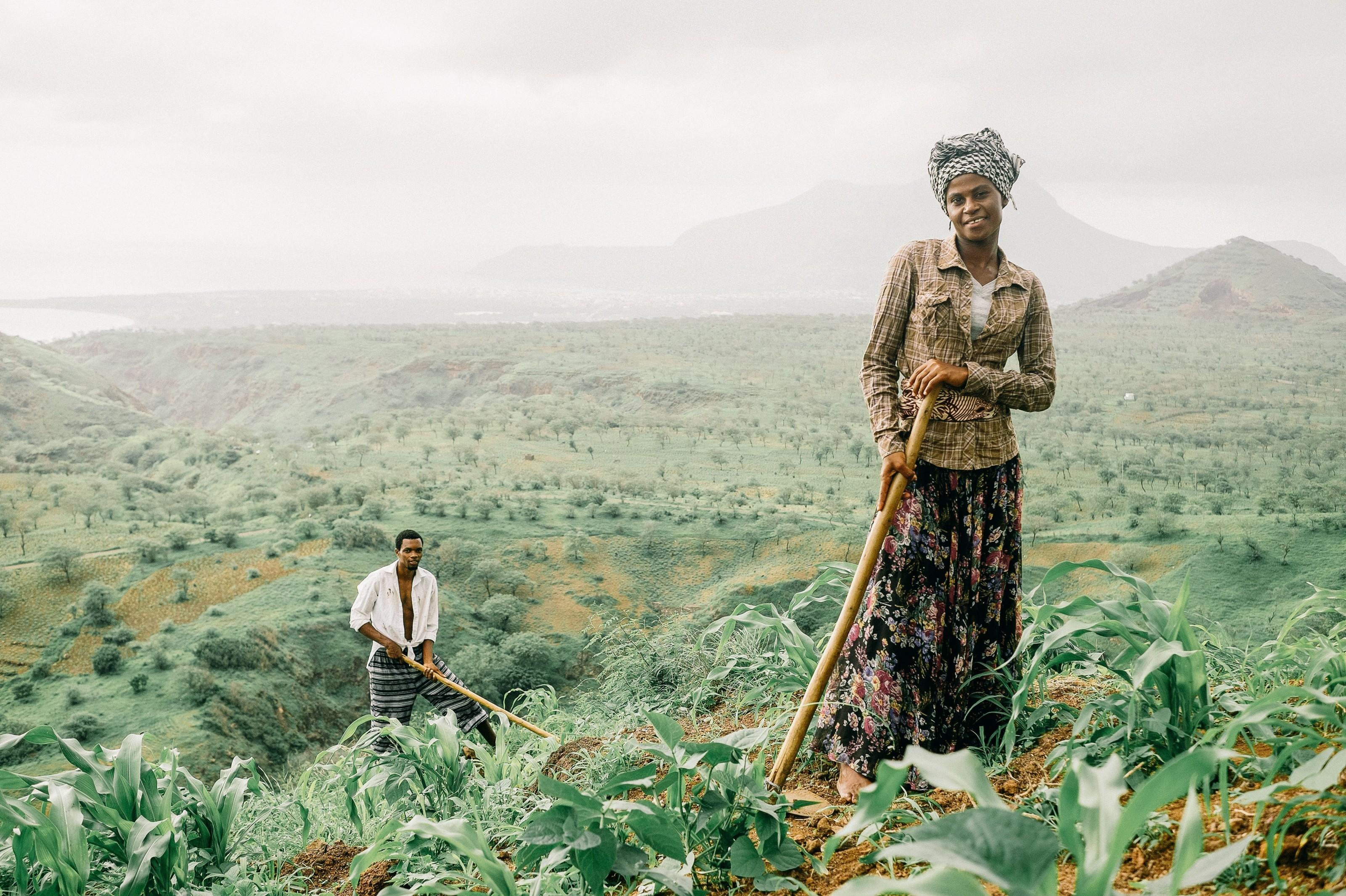 Plantação de milho em Cabo Verde