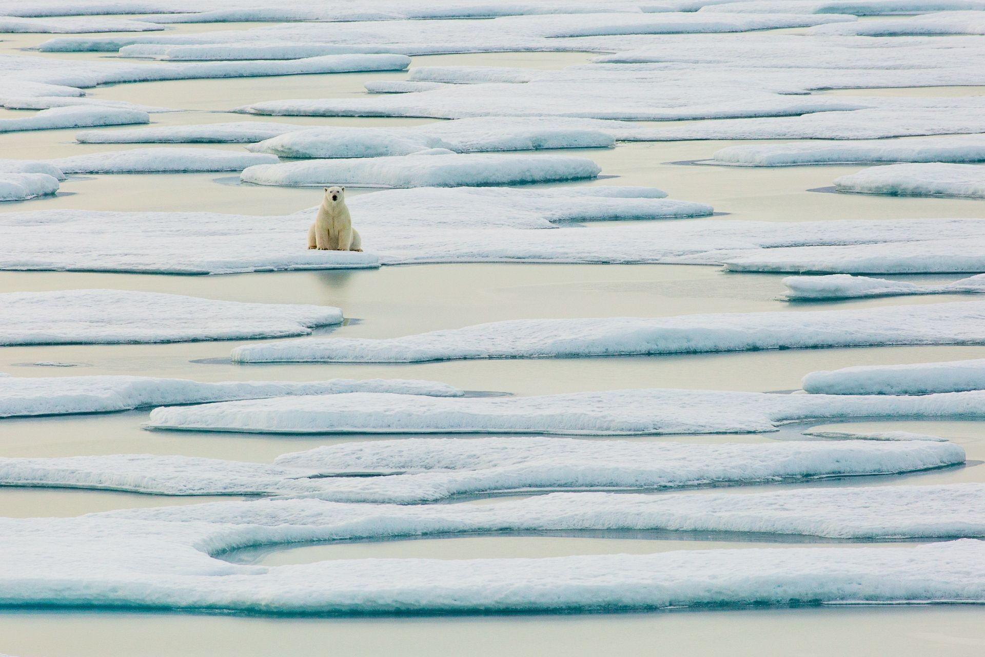 urso polar sobre gelo