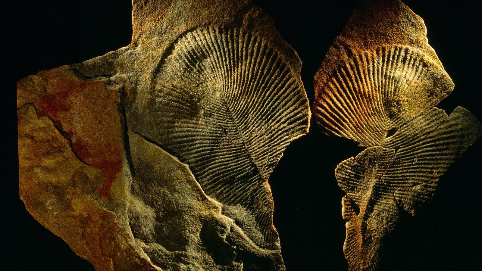 A criatura que deixou esta impressão era animal, protista ou fungo? A química dá novas pistas.