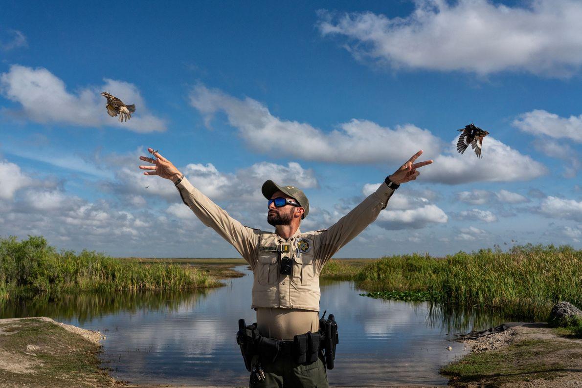Na Flórida, milhares de pássaros canoros são capturados todos os anos para suprir o crescente mercado ...
