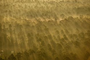 O sol brilha por entre a névoa na Babcock Ranch Preserve, perto de Fort Myers, Flórida, ...