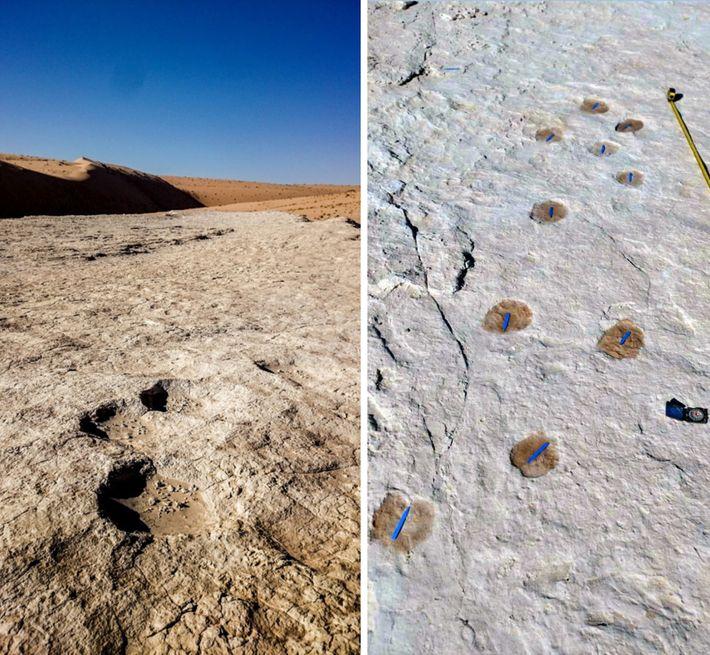 Marcas de elefante (à esquerda) e de camelo (à direita) estavam entre as pegadas fósseis encontradas ...