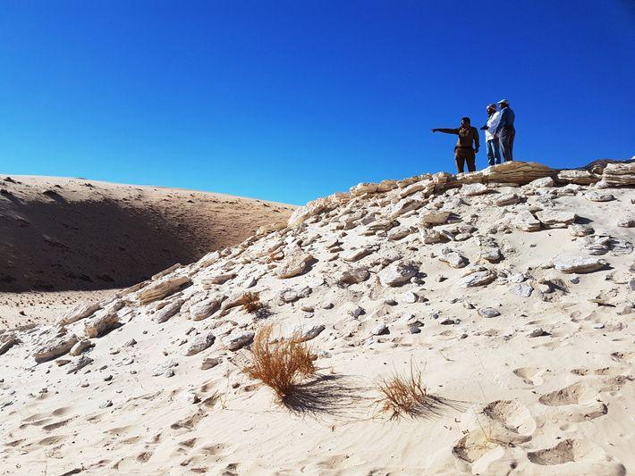 As pegadas fósseis foram encontradas nos sedimentos do antigo lago Alathar, na Arábia Saudita.