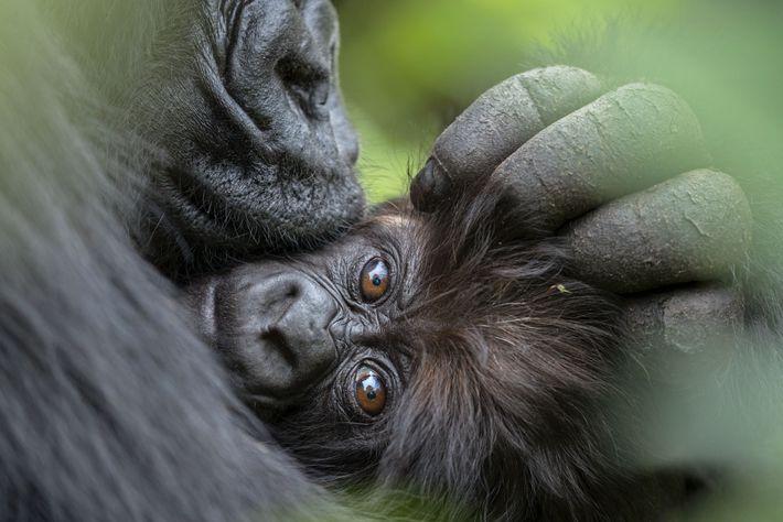 Após uma noite fria de chuva, uma mãe abraça seu bebê de três meses de idade, ...