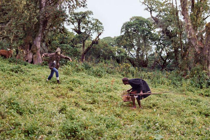 Fossey usa uma máscara de crânio nesta foto de 1969, aproveitando as crenças dos pastores em ...