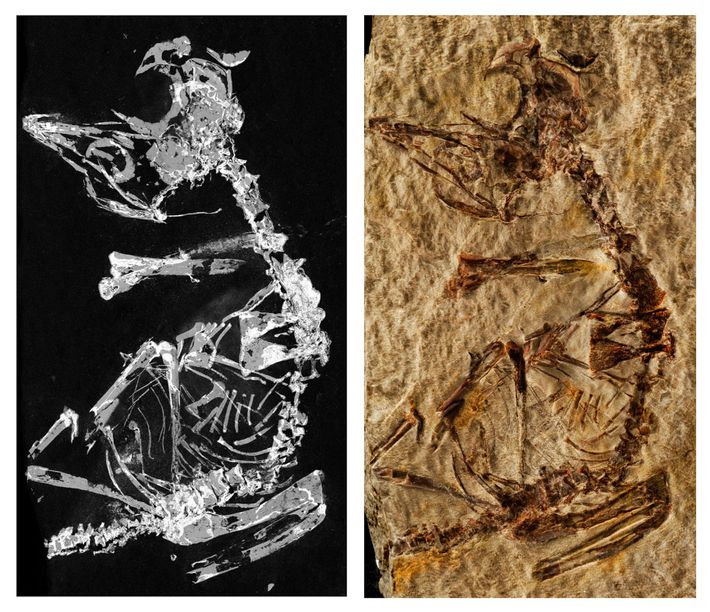 mapeamento-fosforo-fossil--de-ave-do-jurassico