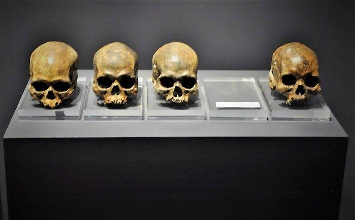 cranios dos povos de Luzia