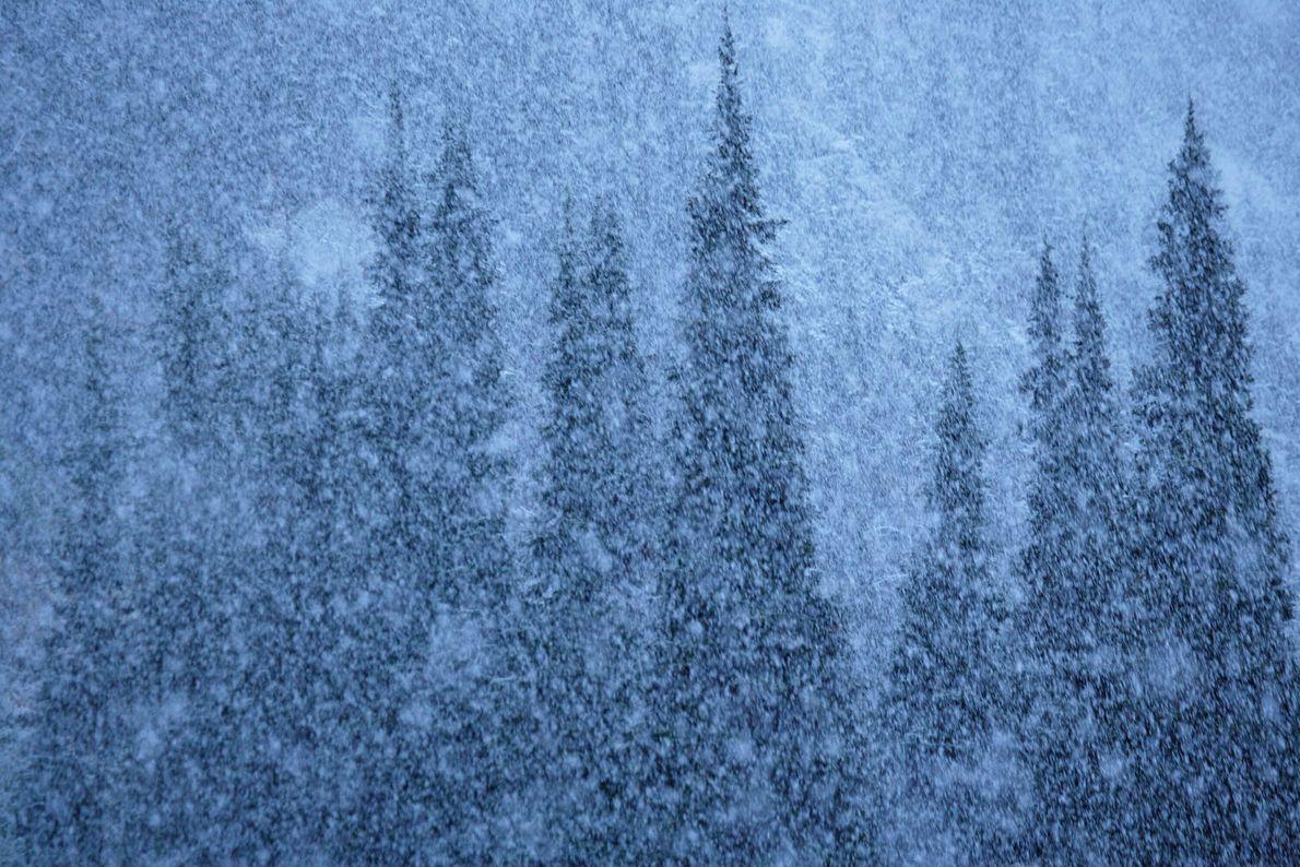 Nevasca de verão