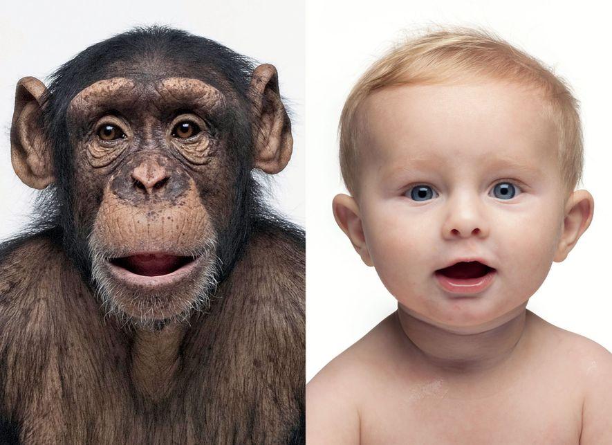 genetica-racismo-cientifico-bebe-chimpanze