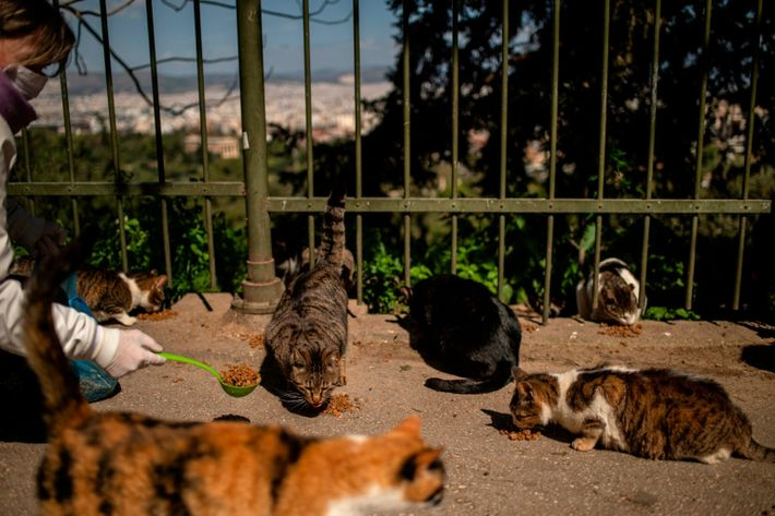 GREECE-HEALTH-VIRUS-ANIMALS