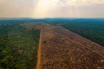 área desmatada amazonia