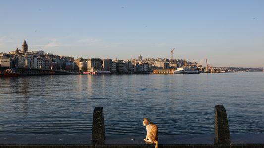 O que acontece com animais de rua com a interrupção repentina do turismo?