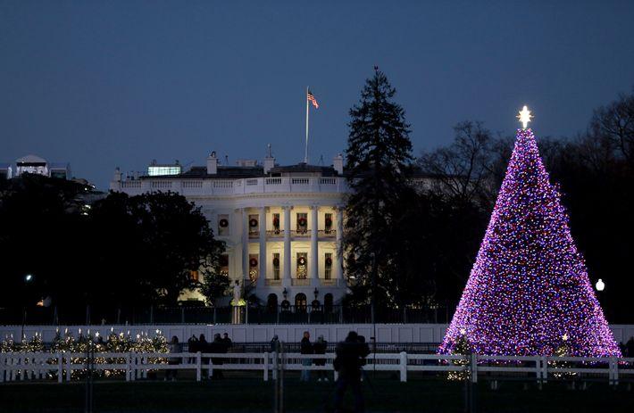 A árvore de Natal Nacional é montada na face sul da Casa Branca, sede do governo ...