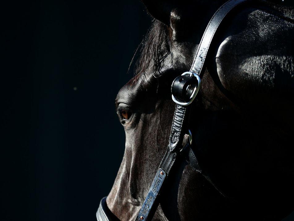 O que precisamos saber sobre o doping em cavalos de corrida