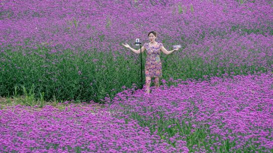 Flowers In Full Bloom In Anyue County