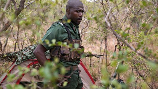 Protetores de rinocerontes na África do Sul tornaram-se grande ameaça à espécie