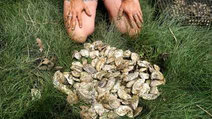 Gostar de ostras frescas pode ajudar o planeta